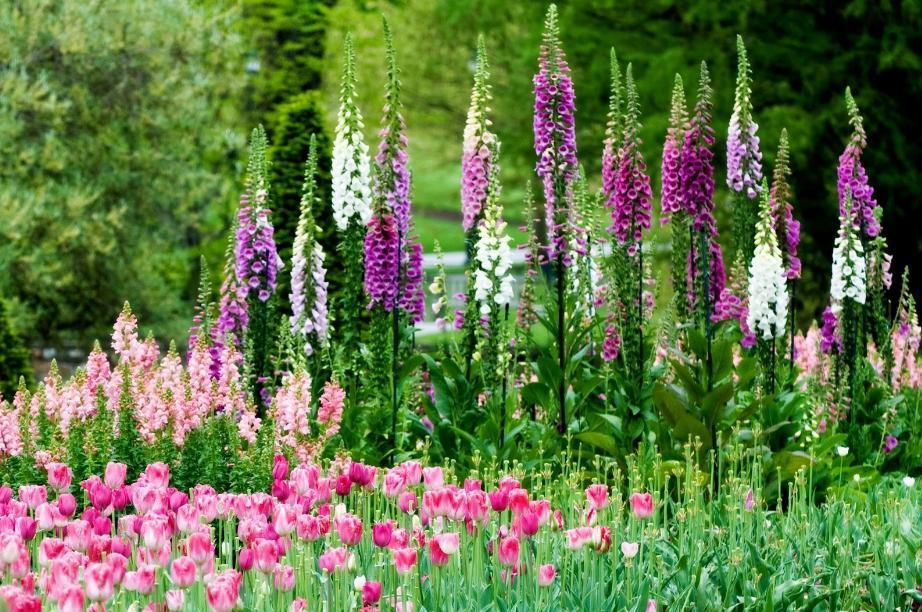 Такая комбинация цветов и растений характерна для свободной групповой посадки в саду природного типа.