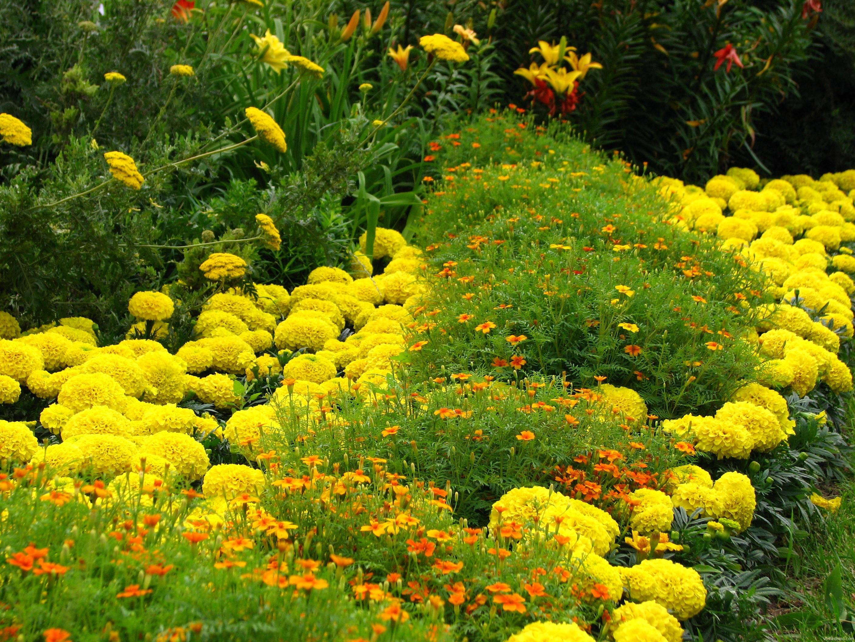 Разные растения в одном цвете