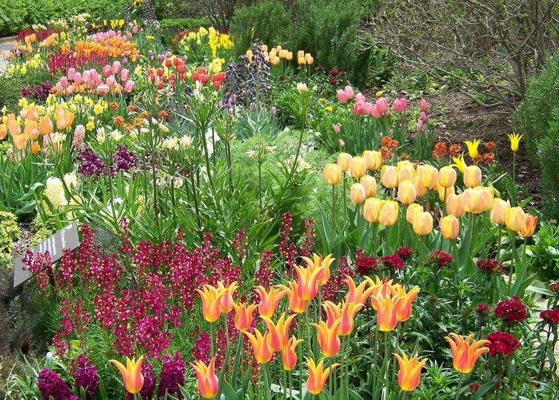 Используйте одни и те же цветовые сочетания для разных растений в разных уголках сада.