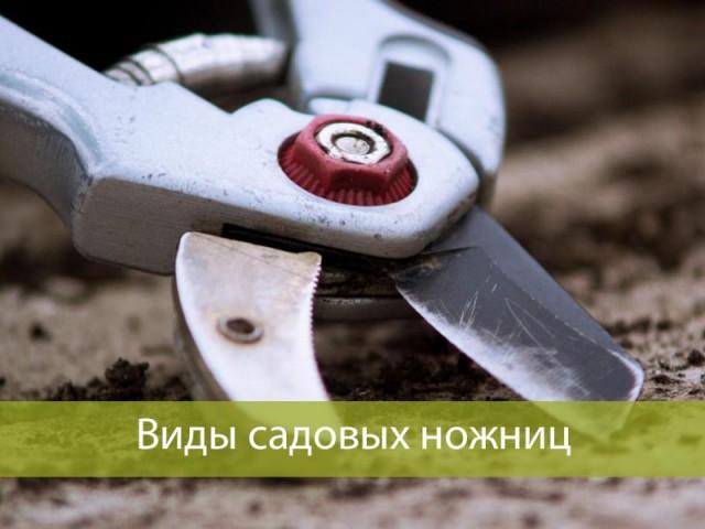 Как выбрать садовые ножницы: основные виды и сфера применения.