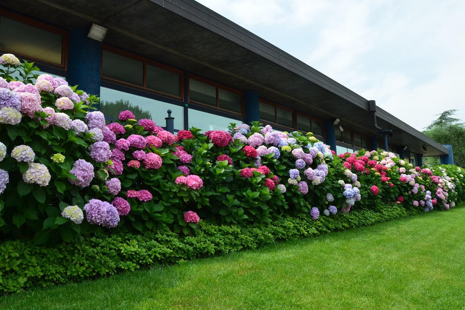 5 секретов быстрого озеленения участка любого размера:  сад непрерывного цветения