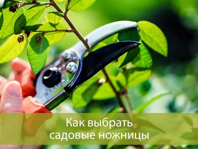 Как выбрать садовые ножницы: основные виды и сфера применения