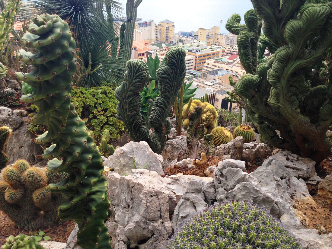 Сад экзотических растений. Монако. JARDIN EXOTIQUE