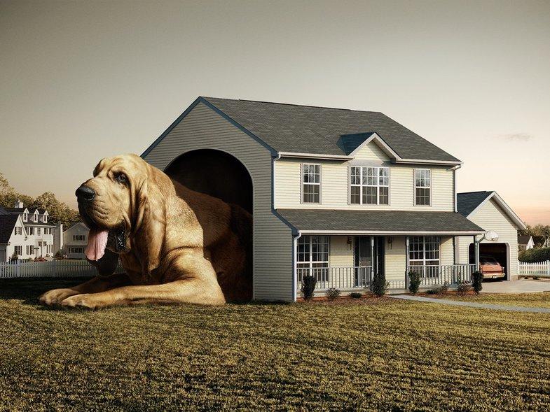 Домик Для Собаки И 20 Полезных Идей Для Домашних Питомцев!