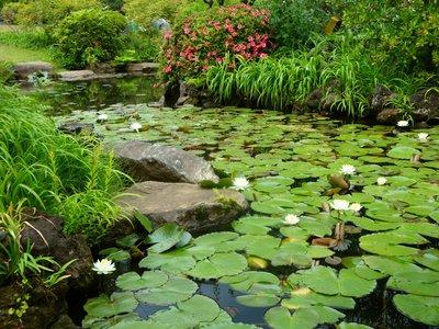 Сад Окума.Пруд с лотосами.