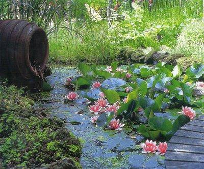 Прудовые растения нужны пруду как воздух! Они выполняют защитную функцию – охраняют воду от цветения и перегрева, насыщают воду кислородом, удаляют вредные вещества, губительно воздействующие на экосистему пруда.