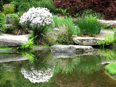 Растения берега, должны иметь красивое цветение, фактурные листья разных тонов (вахта трехлистная, ирис сибирский, лилейник малый).