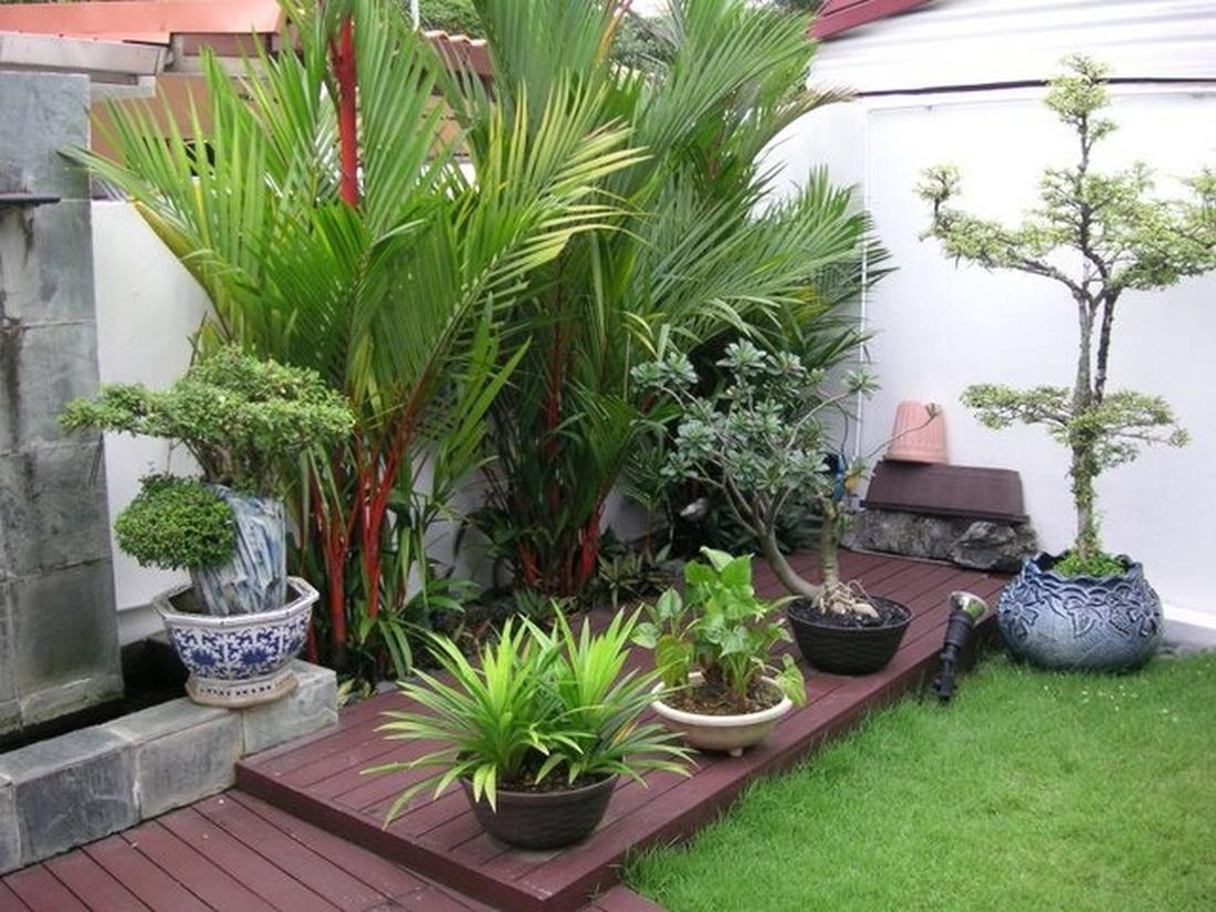 Озеленение контейнерными растениями