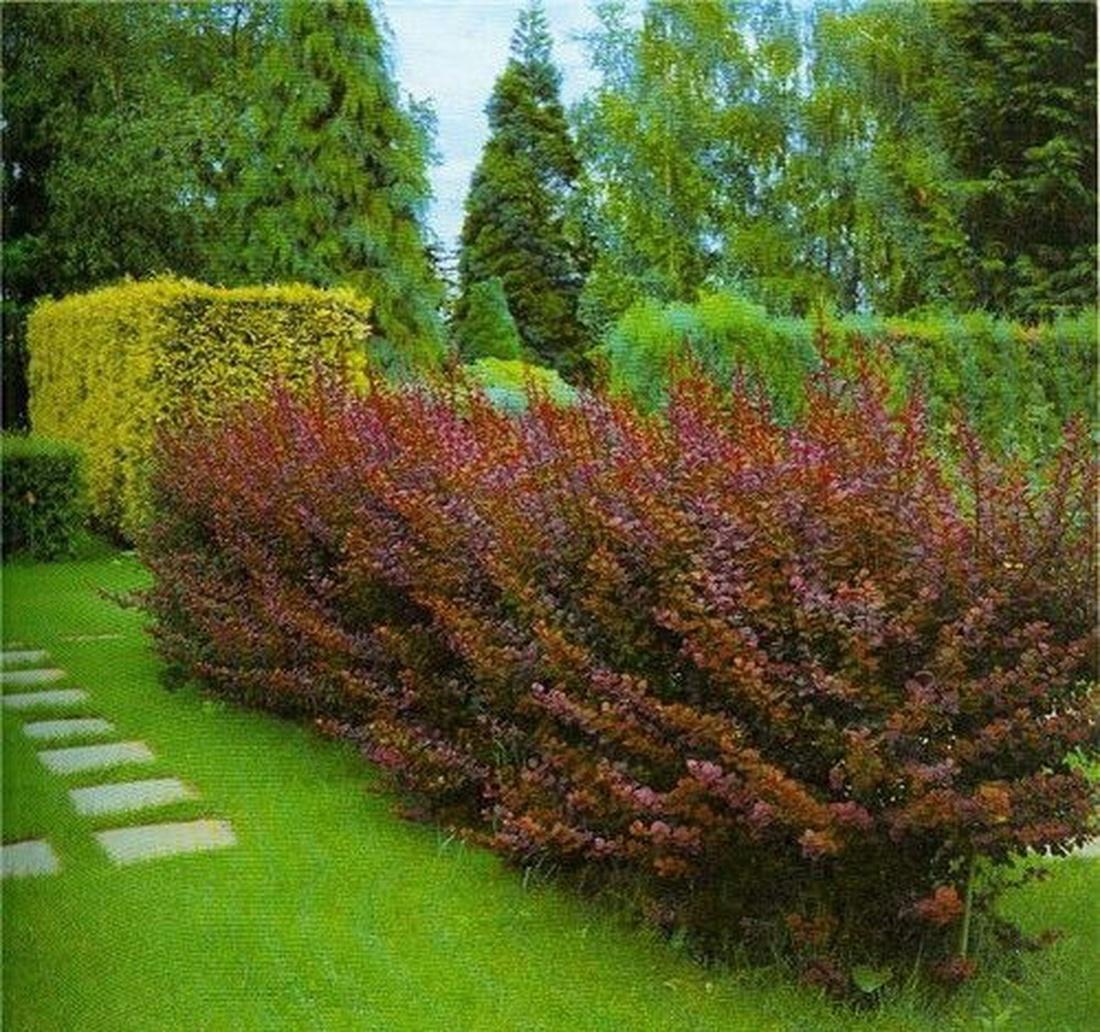Выбирайте растения, которые нравятся вам и подходят стилю и цветовой гамме вашего сада, но учитывайте также требования к почве и освещению самих растений.