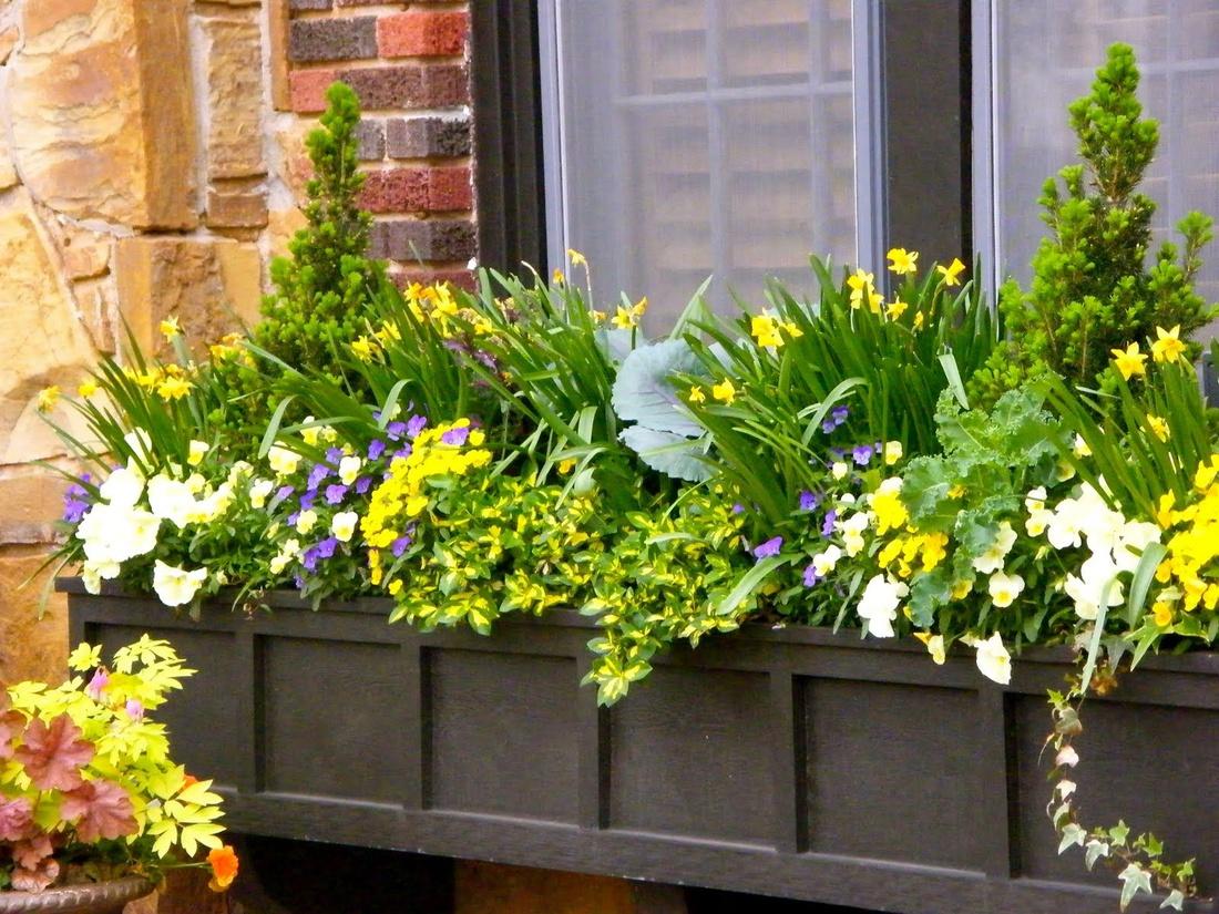 Первоцветы и вечнозеленые в композиции на окне