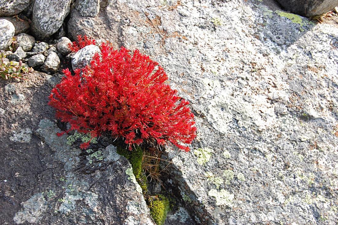 Красиво и естественно смотрятся растения в щелях между камнями, словно их занесло туда ветром и они прижились в столь трудных условиях.