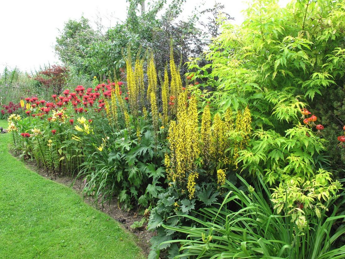 Миксбордер:  желтые лилии, бузульник и яркая красная монарда