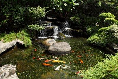 Если в вашем пруду будут жить золотые рыбки, то объем пруда ограничен только вашей фантазией, а глубины вполне хватит 45-60 см.