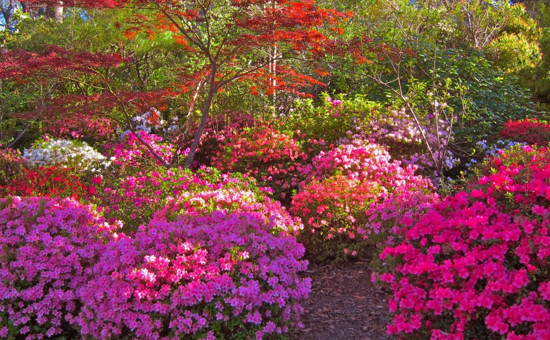 Цветы и кустарники фото и название